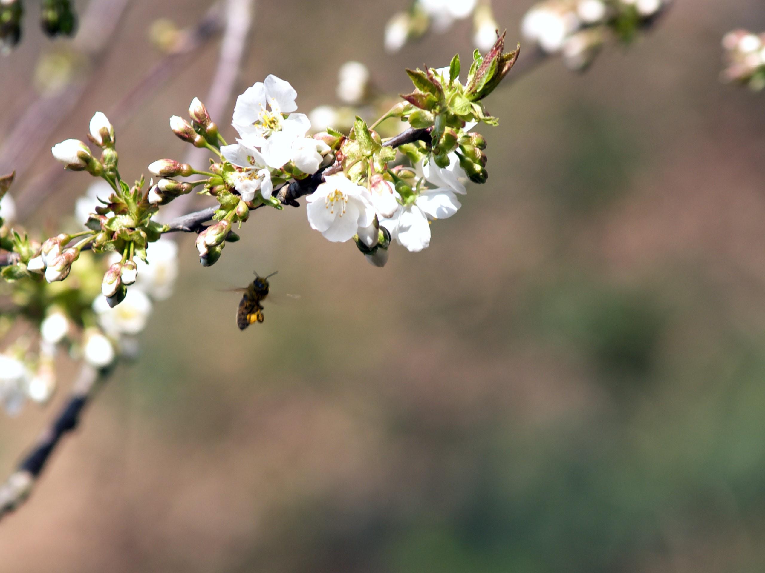 Honig im Online Shop kaufen und die Natur unterstützen